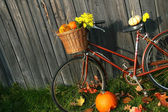 Old bicycle with pumpkins — Stock Photo