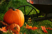 Pumpkins in the grass ready for halloween — Stock Photo