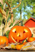 Autumn harvest with scarved pumpkin — Stock Photo
