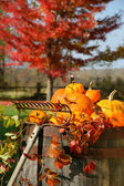 Colorful pumpkins and gourds — Stok fotoğraf