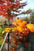Rake and pumpkins — Stock Photo