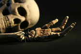 Scary skeleton — Stock Photo