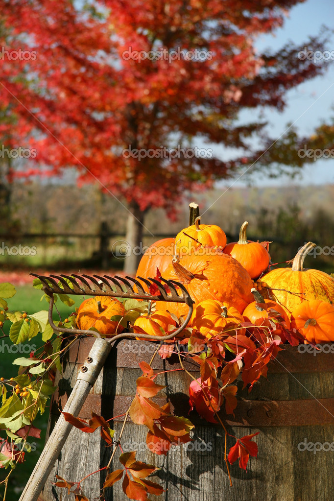 Colorful pumpkins and gourds on wine barrel with red maple tree in background  Stock Photo #3286462
