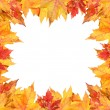 Colorful autumn leaves frame on white - Stock Photo