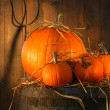 Pumpkins on wine barrel - Stok fotoraf