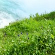 Foto Stock: Grass cliff