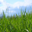 Wild grass — Stock Photo #3293364