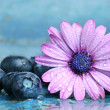 Blueberries and daisy — Stock Photo