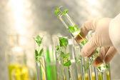 Pequenas plantas em tubos de ensaio — Foto Stock