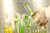 Small plants in test tubes — Stock Photo