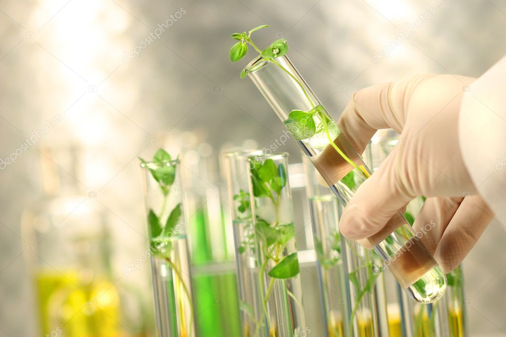 Close-up of small plants in test tubes — Stockfoto #3293288