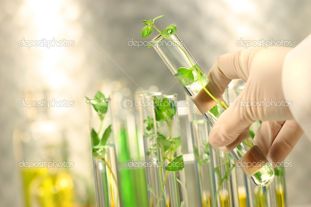 Close-up of small plants in test tubes — Foto de Stock   #3293288