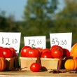 Tomatoes for sale — Stock fotografie