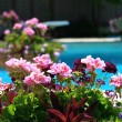 Poolside with beautiful colored flowers - Lizenzfreies Foto