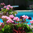 Poolside with beautiful colored flowers - Stock Photo