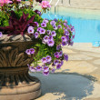 Sandals by the pool with large urn full of flowers - Stock Photo