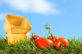 Freshly picked tomatoes — Stock Photo
