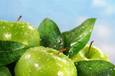 Green apples against a sunny blue sky — Stock Photo