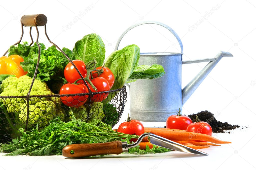 Fresh vegetables with watering can and black earth — Stock Photo #3321036