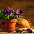 Pruning purple pansies — Stock Photo