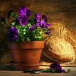 Purple pansies with old straw hat - Foto Stock