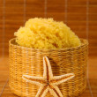 Sea sponge and starfish — Stock Photo