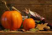 Two pumpkins on the shelf — 图库照片