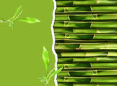 Dense bamboo stalk with copyspace — Stock Photo