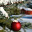 Stock Photo: Pine branch and red ball
