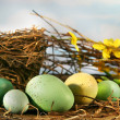 Bird nest and eggs - Stock Photo
