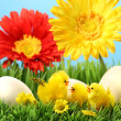 Royalty-Free Stock Photo: Easter chicks in the grass