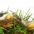 Eggs in the tall grass with nest — Stock Photo