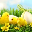 Royalty-Free Stock Photo: Little yellow easter chicks in the tall grass
