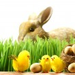 Three little chicks in the grass — Stock Photo
