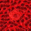 Over view of large red roses - Stock Photo
