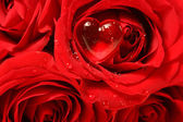 Close-up of a rose with red heart on petal — Stockfoto