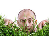 Man peering through tall grass — Stock Photo
