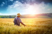Farmer walking through a wheat field — Stock Photo