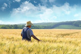 Farmer walking through a wheat field — ストック写真