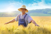 Farmer checking put his crop of wheat — Stock Photo