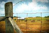 Field of freshly cut bales of hay — Stock Photo