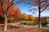 Beautiful fall park few. — Stock Photo