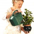 Senior woman watering plant. - Foto Stock