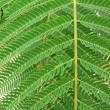 Fern leaf. — Stock Photo