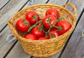 Ecological Tomatoes — Stock Photo