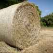 Full Hay ball — Stock Photo