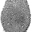 Black and White Fingerprint - Stock Photo