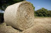Full Hay ball — Stock Photo