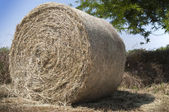 Hay ball shadow — Stock Photo