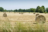 Hay balls on field — Stock Photo